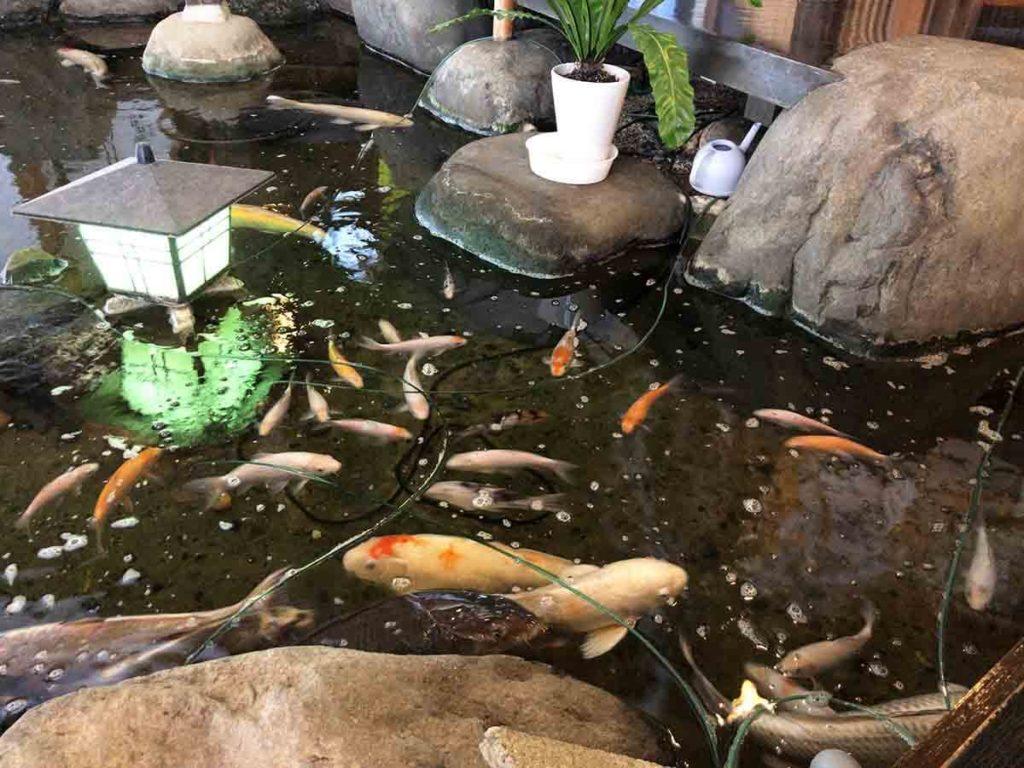 巳之助の鯉